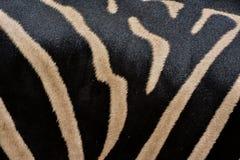 Картина реальной кожи зебры Стоковые Изображения RF
