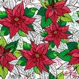 Картина рождества безшовная poinsettia Стоковые Изображения