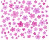 Картина розовой акварели цвета ручной работы Стоковые Фото