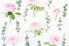 Картина розовых цветков и евкалипта разветвляет на белой предпосылке Плоское положение, взгляд сверху Валентайн предпосылки s Стоковое фото RF