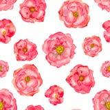 Картина Розы акварели безшовная Стоковые Фото