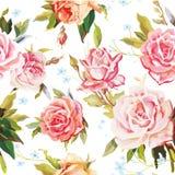 Картина розы цвета элегантности безшовная на белой предпосылке, иллюстрации вектора Бесплатная Иллюстрация