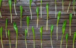 Картина свежих зеленых луков весны на древесине Стоковое Изображение