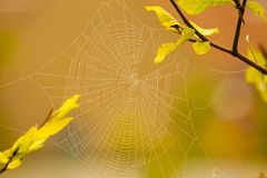 Картина сети паука для spiderweb хеллоуина страшного Стоковое фото RF