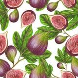 Картина смоквы Стоковые Изображения