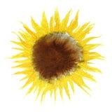 Картина солнцецвета Watercolour Стоковые Изображения RF