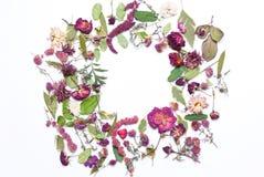 Картина, состав высушенных цветков, пинк, красные розы и зеленый цвет Стоковое Изображение