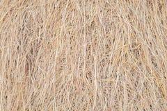 Картина соломы риса стоковое изображение rf