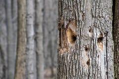 Картина стороны на стволе дерева стоковое фото