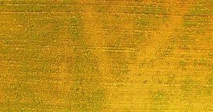Картина строк заводов сток-видео