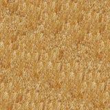 картина сухой травы безшовная Стоковая Фотография RF
