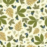 Картина с листьями и голубиками зеленого цвета Стоковое Изображение