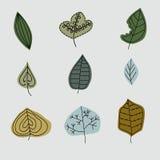 Картина с лист, абстрактная текстура лист, комплект Стоковое Фото