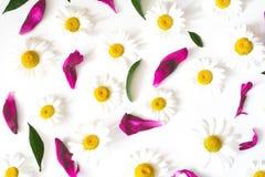 Картина с стоцветом цветет, лепестки и листья Стоковые Фотографии RF