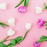 Картина с тюльпанами цветет на розовой пастельной предпосылке Плоское положение, взгляд сверху Предпосылка дня женщины Стоковые Изображения RF