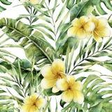 Картина с plumeria, листья акварели пальмы Покрашенная рукой экзотическая ветвь растительности Ботаническая иллюстрация для Стоковое фото RF