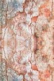Картина текстуры коры дерева деревянная кожура для предпосылки с космосом экземпляра добавляет текст Стоковое Фото