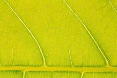 Картина текстуры лист для окружающей среды предпосылки весны и дизайна концепции экологичности Стоковое фото RF