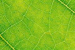 Картина текстуры лист для окружающей среды предпосылки весны и дизайна концепции экологичности Стоковое Изображение RF