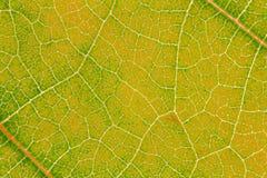 Картина текстуры лист для окружающей среды предпосылки весны и дизайна концепции экологичности Стоковые Фотографии RF