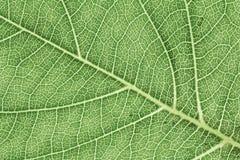 Картина текстуры лист для окружающей среды предпосылки весны и дизайна концепции экологичности Стоковое Фото