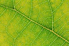 Картина текстуры лист для окружающей среды предпосылки весны и дизайна концепции экологичности Стоковая Фотография RF