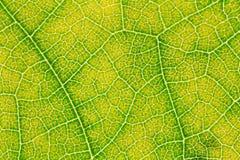 Картина текстуры лист для окружающей среды предпосылки весны и дизайна концепции экологичности Стоковое Изображение