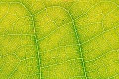 Картина текстуры лист для окружающей среды предпосылки весны и дизайна концепции экологичности Стоковая Фотография