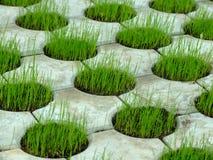 картина травы бетона 01 Стоковые Изображения