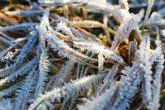 Картина травы зимы морозная Стоковое Изображение RF
