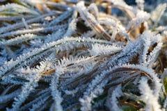 Картина травы зимы морозная Стоковые Изображения RF