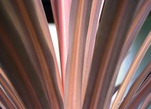 картина травы конспекта близкая вверх очень Стоковая Фотография RF