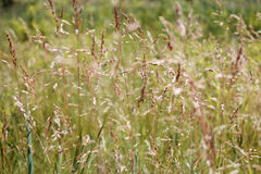 Картина травы Стоковое фото RF