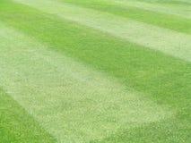 картина травы Стоковое Фото