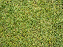 Картина травы Стоковые Фото