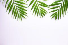 Картина тропических зеленых листьев на белой предпосылке o иллюстрация вектора