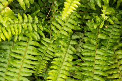 Картина тропических листьев Стоковое Изображение RF