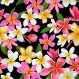 Картина тропических цветков акварели безшовная Флористической предпосылка нарисованная рукой Экзотический дизайн цветков Plumeria бесплатная иллюстрация