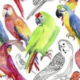 Картина тропического попугая безшовная желтый цвет акварели стародедовской предпосылки темный бумажный бесплатная иллюстрация