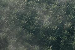 Картина фермы ладони, фермы ладони от взгляд сверху Стоковая Фотография