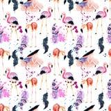 Картина фламинго акварели безшовная изолированная на белой предпосылке Стоковое Изображение