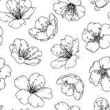 Картина цветения Сакуры вишни флористическая безшовная бесплатная иллюстрация