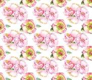 Картина цветка акварели розовая Цветок wath backgrond акварели Стоковое фото RF
