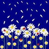 Картина цветка безшовная с маргаритками иллюстрация штока