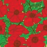 Картина цветка мака безшовная Стоковая Фотография RF