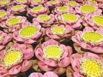 Картина цветка лотоса Стоковая Фотография