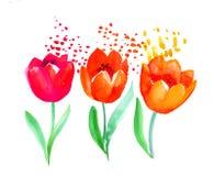 Картина цветка тюльпана atyle акварели наивная Весна нарисованная рукой Стоковое Изображение RF