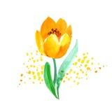 Картина цветка тюльпана atyle акварели наивная Стоковая Фотография