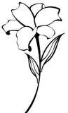 картина цветка бесплатная иллюстрация
