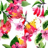 Картина цветка weigela Wildflower в стиле акварели